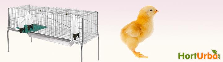 Gàbies per pollastres
